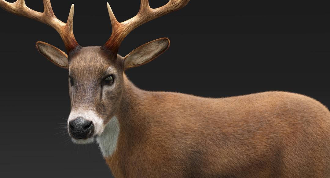 Deer (Fur) Rigged Deer Fur 1 png