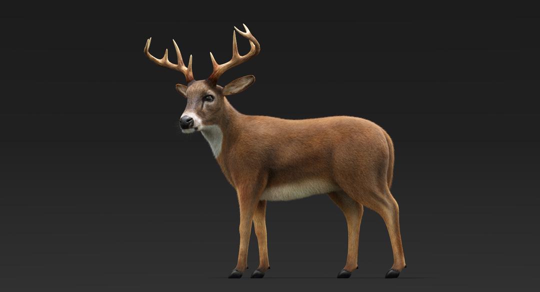 Deer (Fur) Rigged Deer Fur 3 png