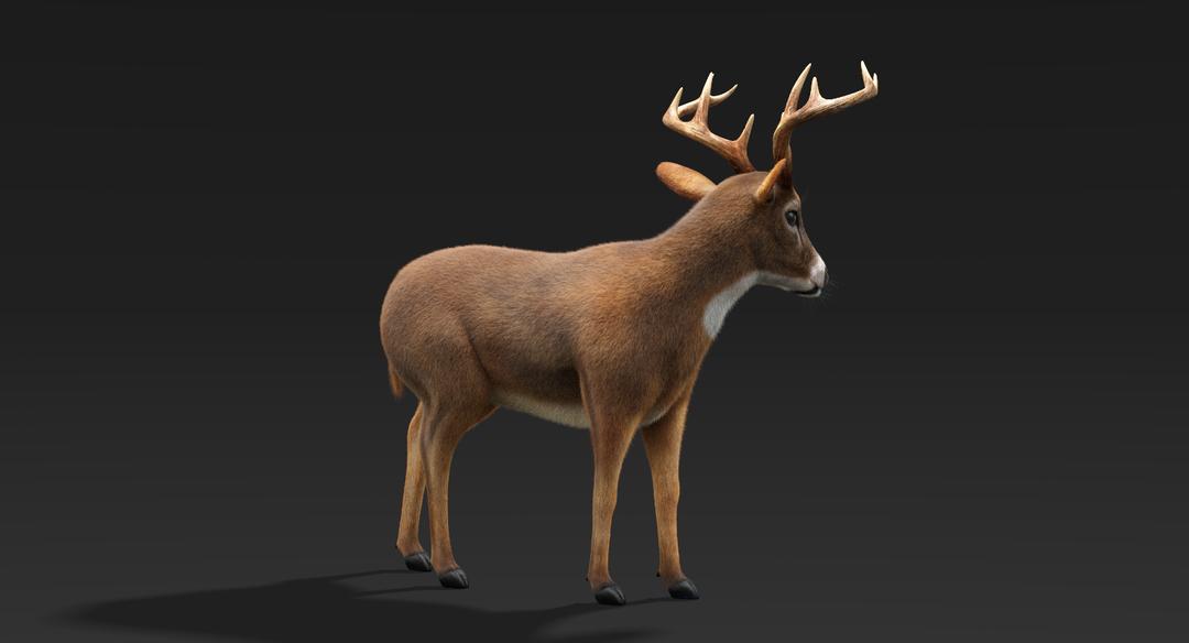 Deer (Fur) Rigged Deer Fur 4 png
