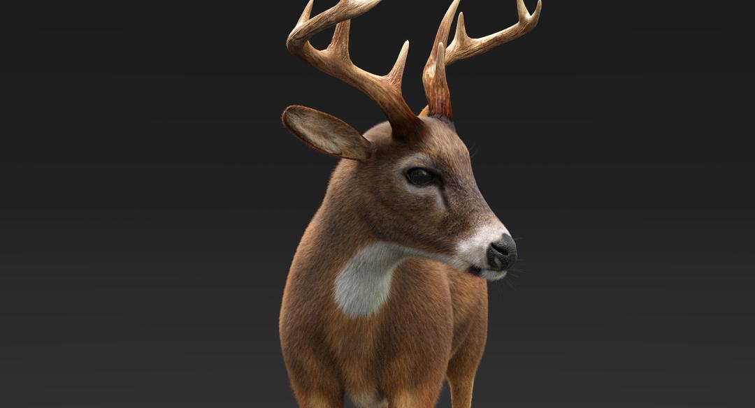 Deer (Fur) Rigged Deer Fur 9 png