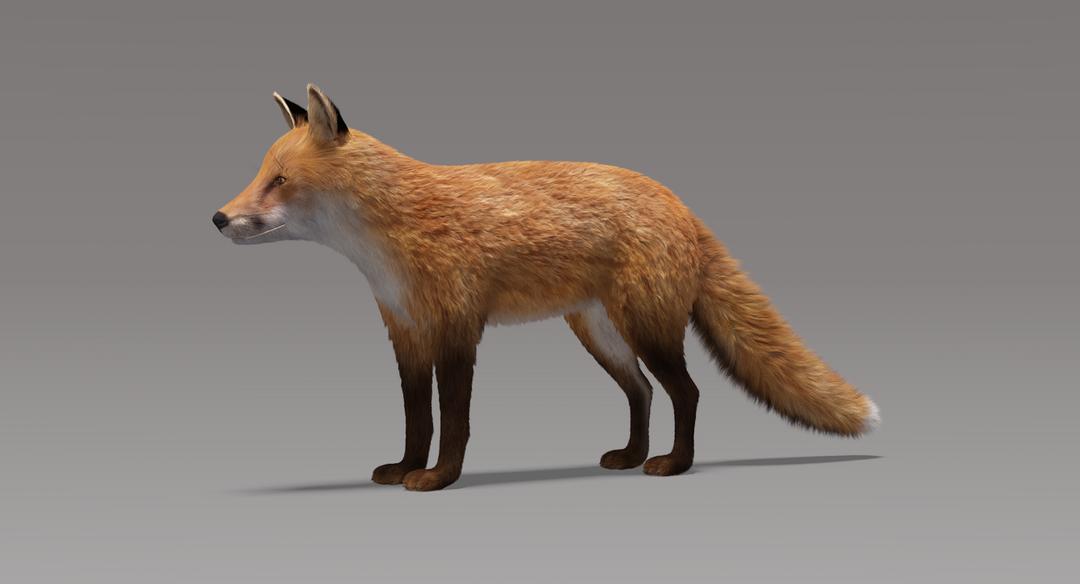Fox (Fur) Fox Fur 1 png
