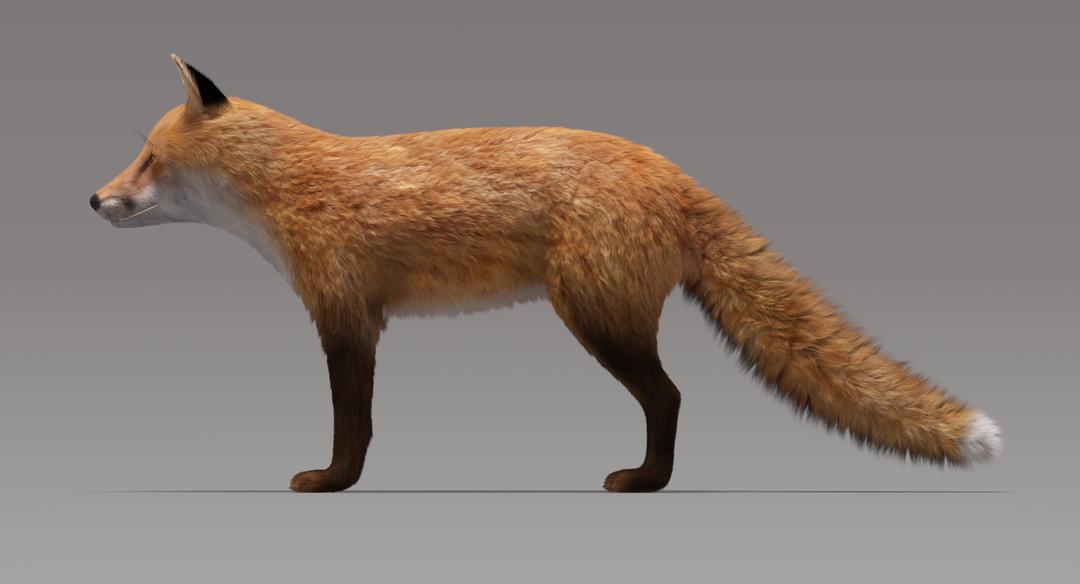 Fox (Fur) Fox Fur 3 png
