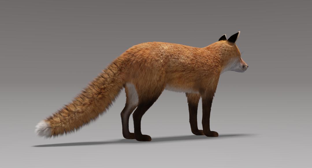 Fox (Fur) Fox Fur 7 png