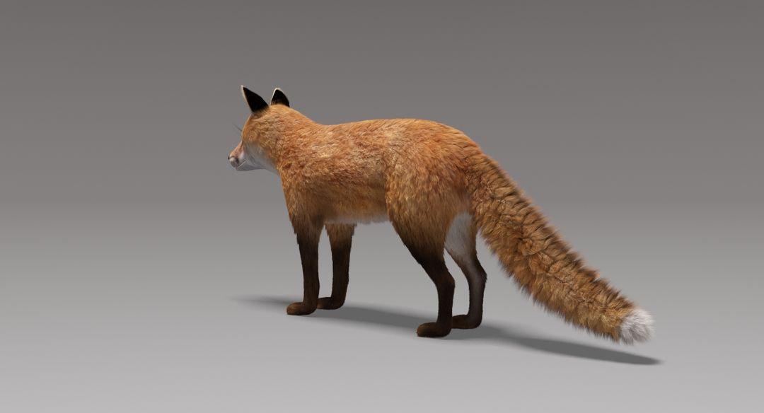 Fox (Fur) Fox Fur 8 jpg