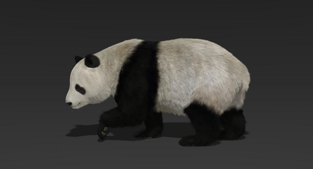 Giant Panda (Fur) Rigged Panda Fur 1 png