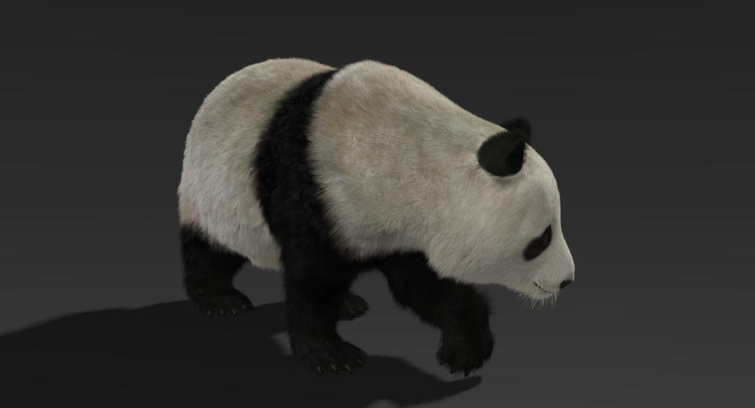 Giant Panda (Fur) Rigged Panda Fur 2 png