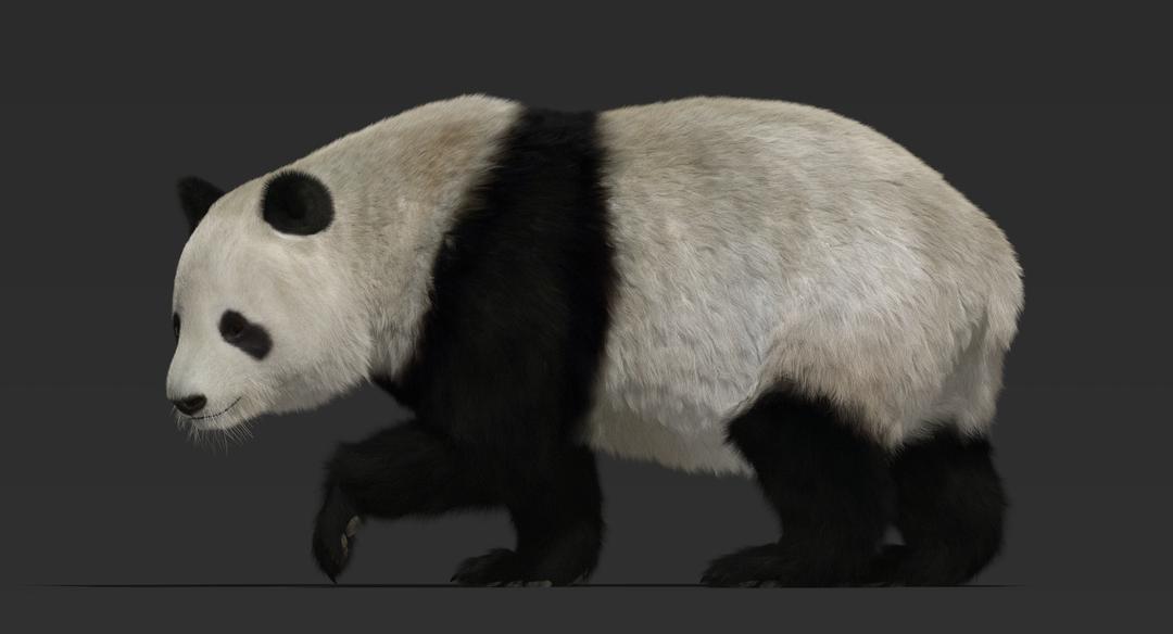 Giant Panda (Fur) Rigged Panda Fur 3 png