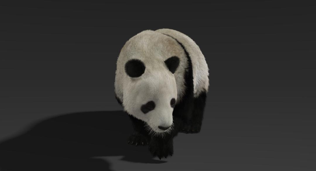 Giant Panda (Fur) Rigged Panda Fur 5 png
