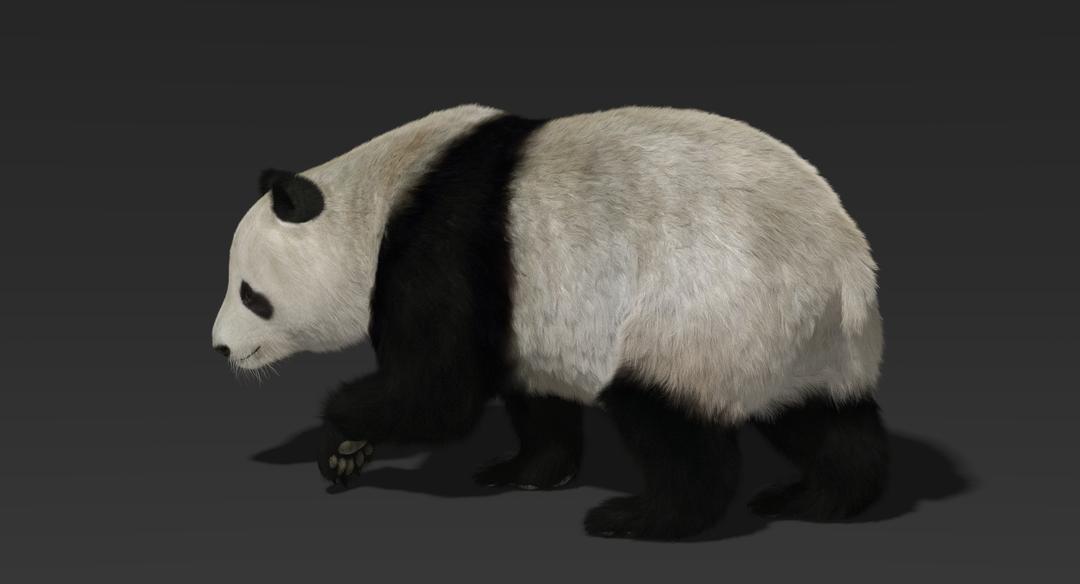 Giant Panda (Fur) Rigged Panda Fur 6 png