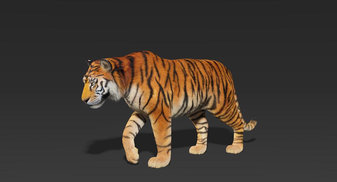 Tiger (Fur) Rigged Tiger Fur 1 png
