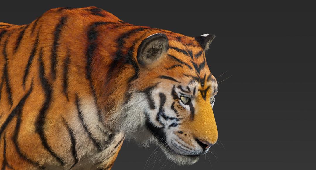 Tiger (Fur) Rigged Tiger Fur 3 png