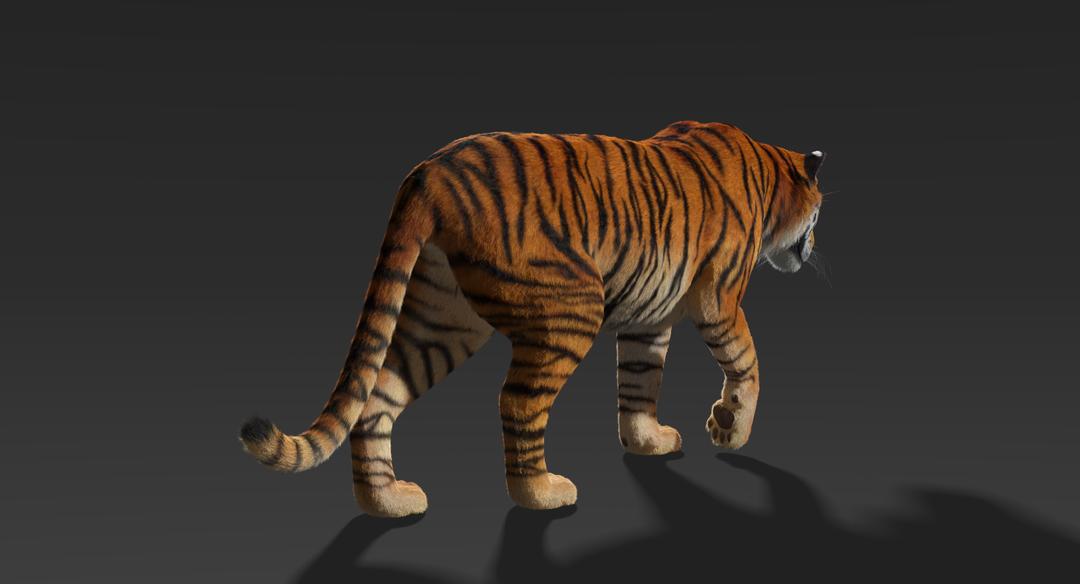 Tiger (Fur) Rigged Tiger Fur 5 png