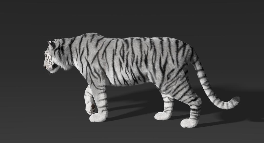 Tiger (Fur) Rigged Tiger Fur 8 png