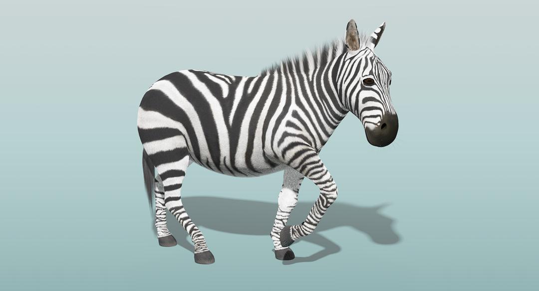 Zebra (Fur) Rigged Zebra Fur Rigged 1 png