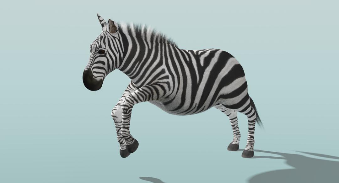 Zebra (Fur) Rigged Zebra Fur Rigged 2 png