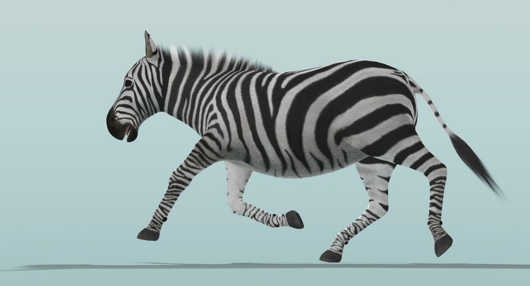 Zebra (Fur) Rigged Zebra Fur Rigged 4 png