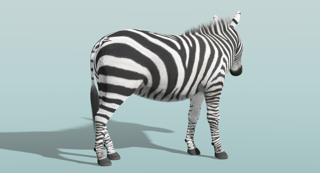 Zebra (Fur) Rigged Zebra Fur Rigged 6 png