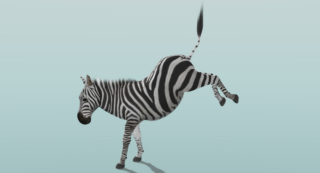 Zebra (Fur) Rigged Zebra Fur Rigged 8 png