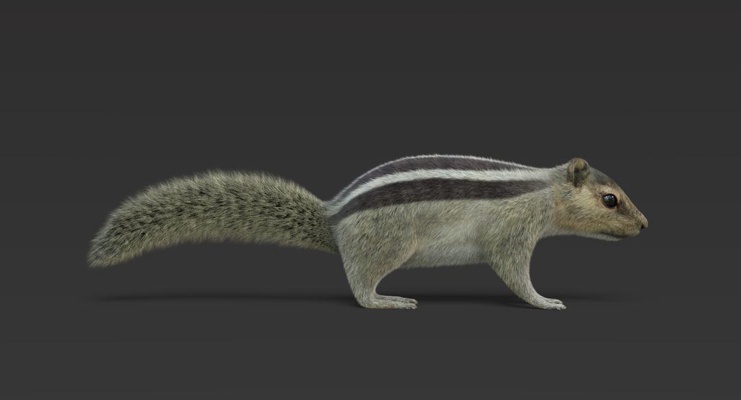Squirrel (Fur) Squirrel 1 png