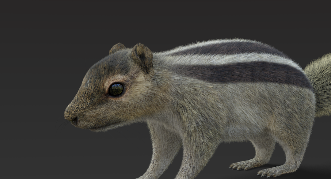 Squirrel (Fur) Squirrel 2 png