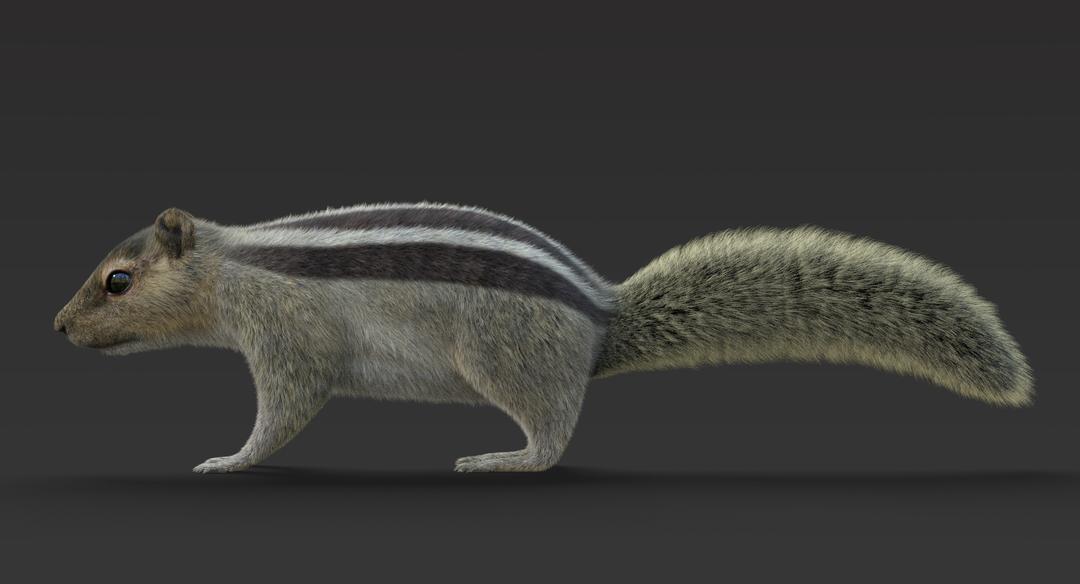 Squirrel (Fur) Squirrel 3 png