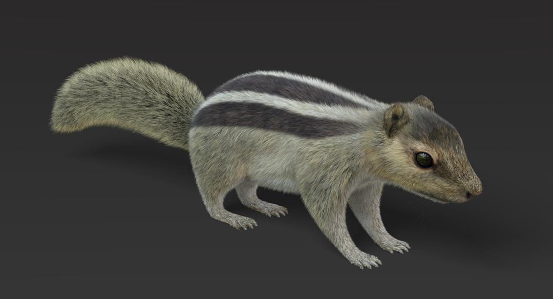 Squirrel (Fur) Squirrel 5 png