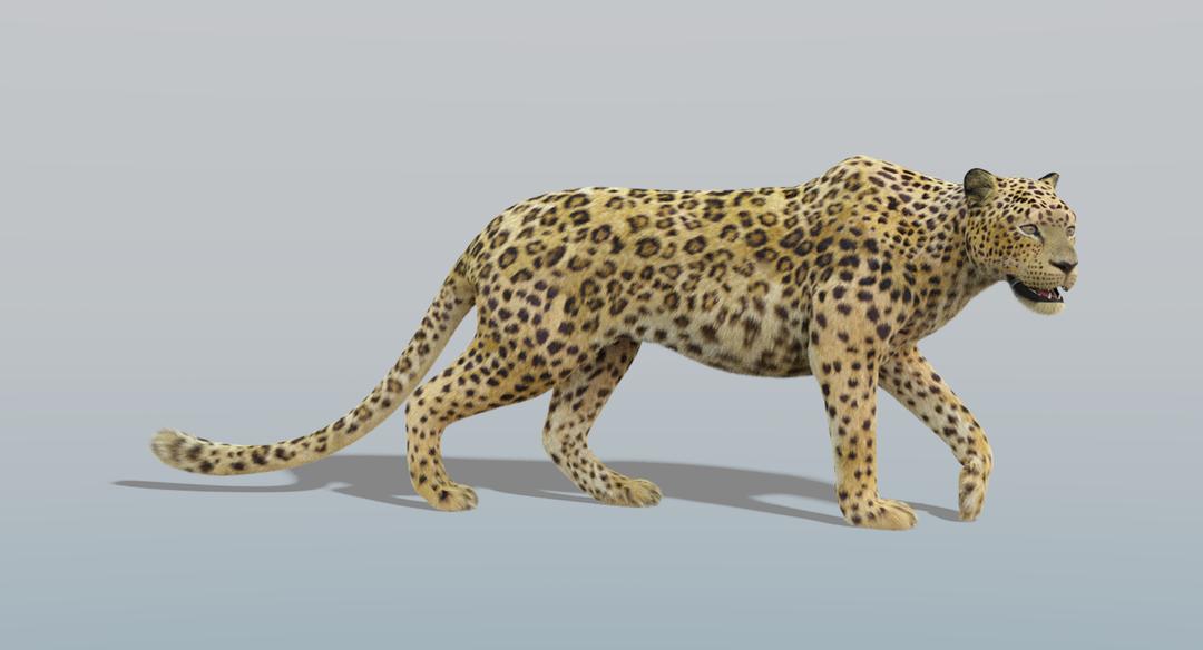 Leopard (Fur) Rigged Leopard 1 png