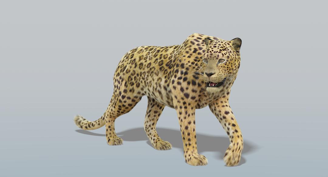 Leopard (Fur) Rigged Leopard 2 png