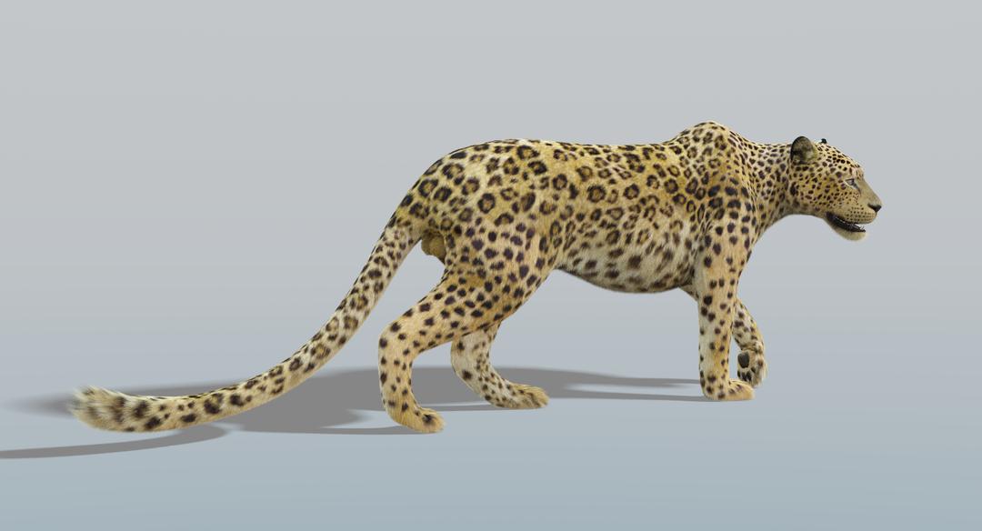 Leopard (Fur) Rigged Leopard 5 png