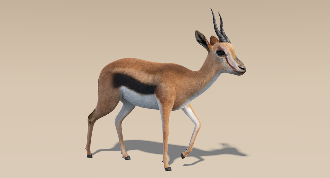 Thomson Gazelle (Fur) Rigged Thomson Gazelle 1 png