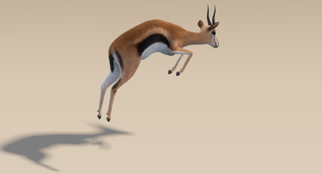 Thomson Gazelle (Fur) Rigged Thomson Gazelle 10 png