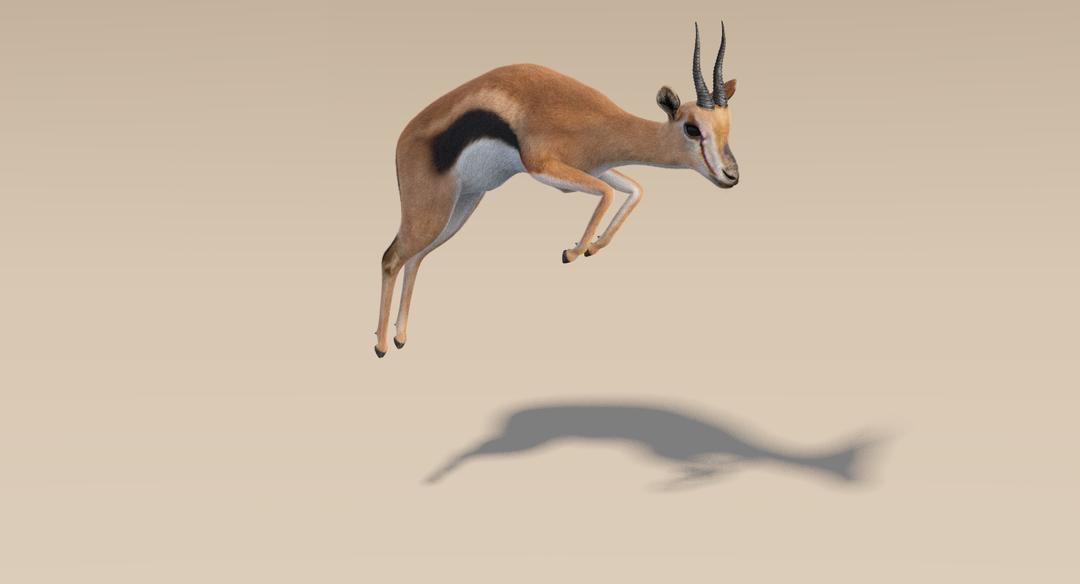 Thomson Gazelle (Fur) Rigged Thomson Gazelle 11 png