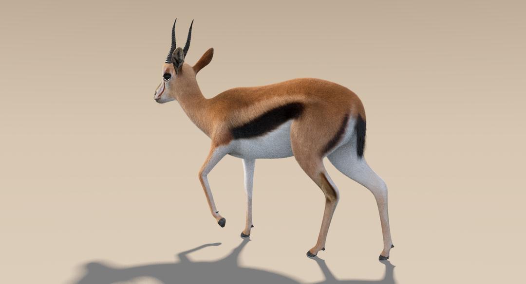 Thomson Gazelle (Fur) Rigged Thomson Gazelle 3 png
