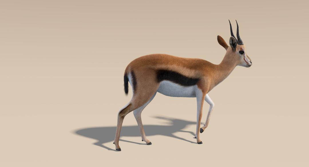 Thomson Gazelle (Fur) Rigged Thomson Gazelle 5 png