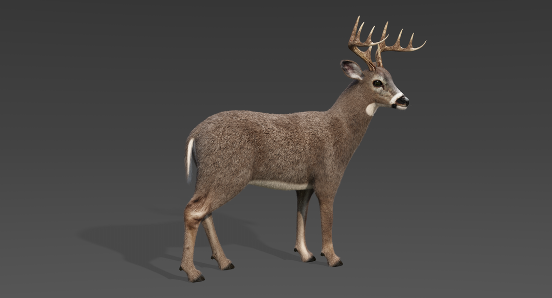 White Tailed Deer 2 (Fur) Rigged Deer 1 png
