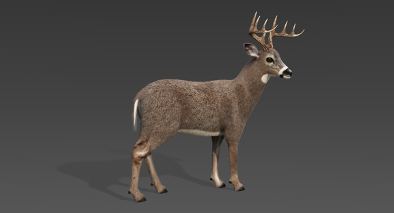 White Tailed Deer 2 (Fur) Rigged