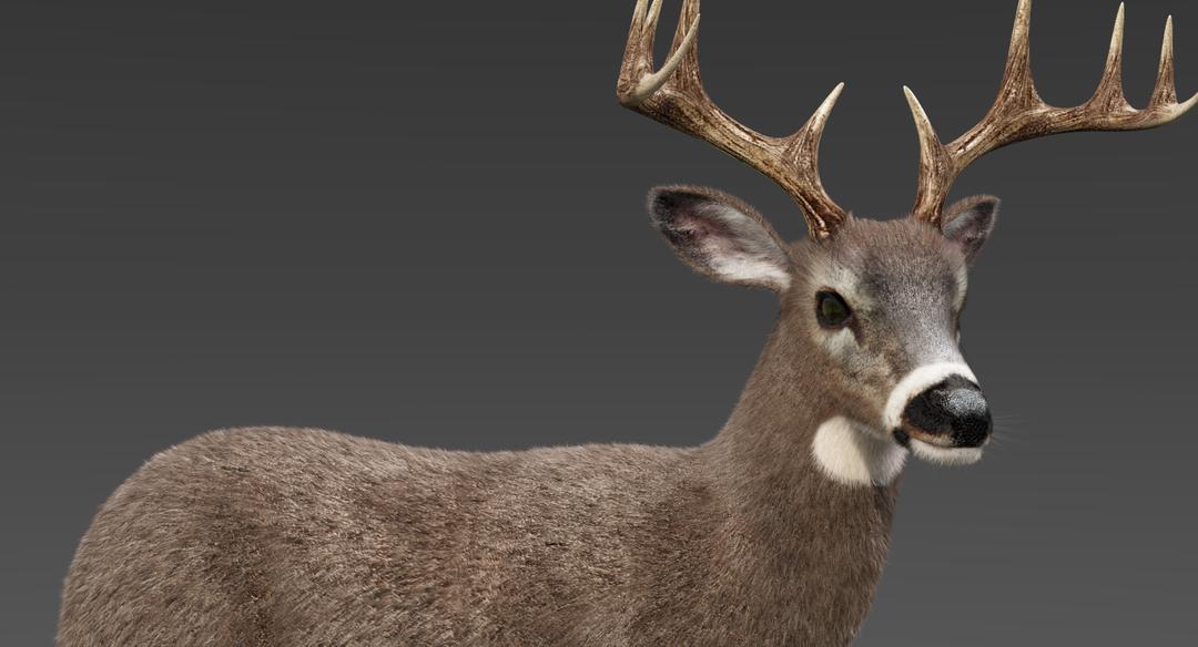 White Tailed Deer 2 (Fur) Rigged Deer 2 png