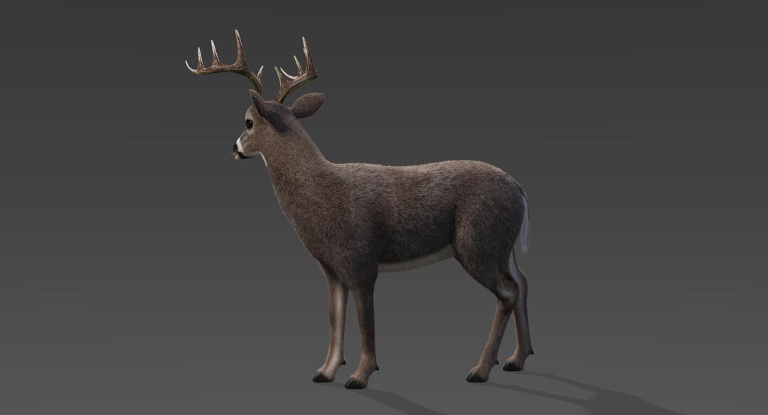 White Tailed Deer 2 (Fur) Rigged Deer 3 png