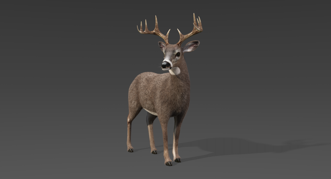 White Tailed Deer 2 (Fur) Rigged Deer 4 png
