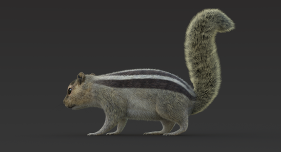 Squirrel (Fur) Rigged