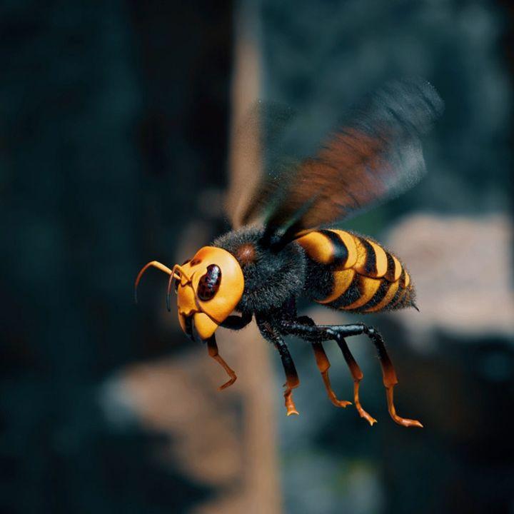 3D models hornet jpg