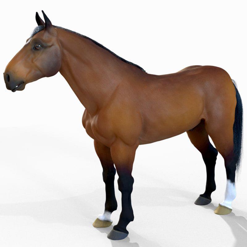 3D models horse jpg