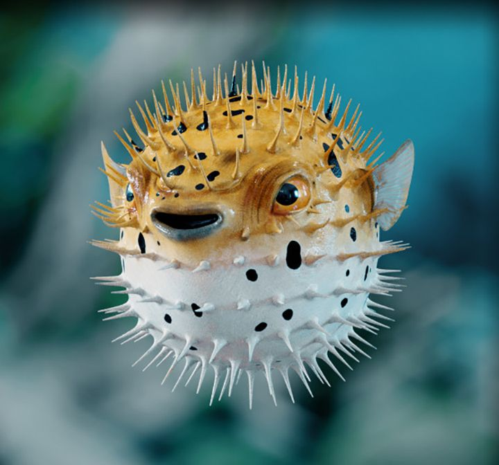 3D models ray della calce pufferfish1 jpg