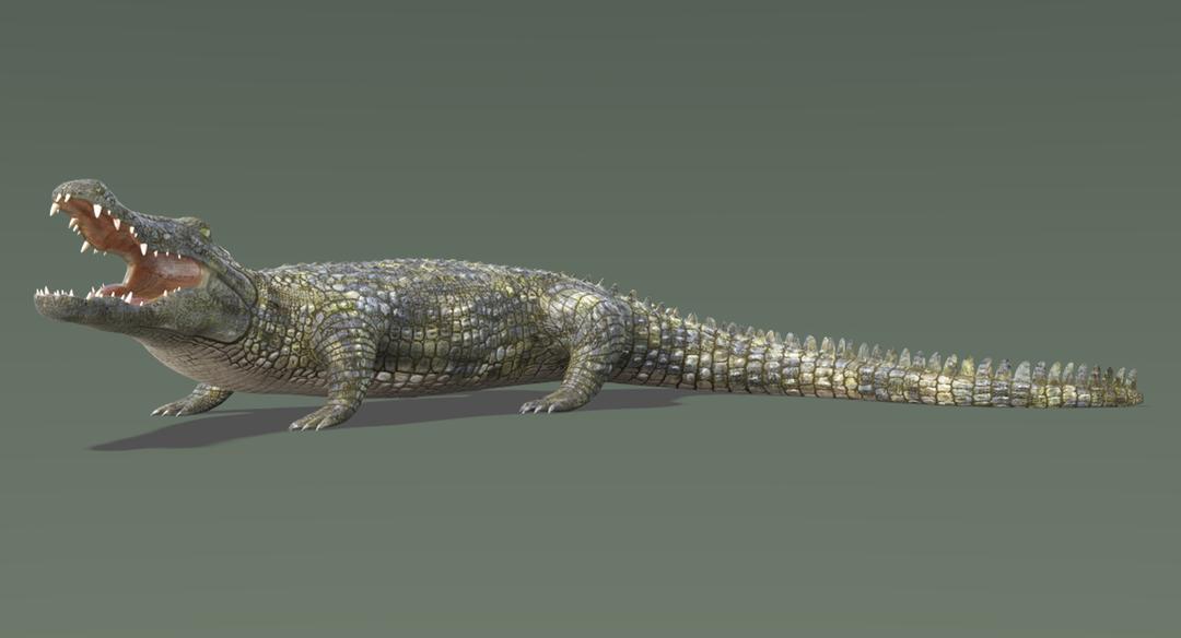 Crocodile 2 Rigged Crocodile 1 png