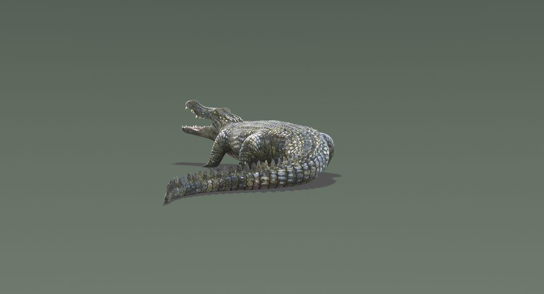 Crocodile 2 Rigged Crocodile 11 jpg