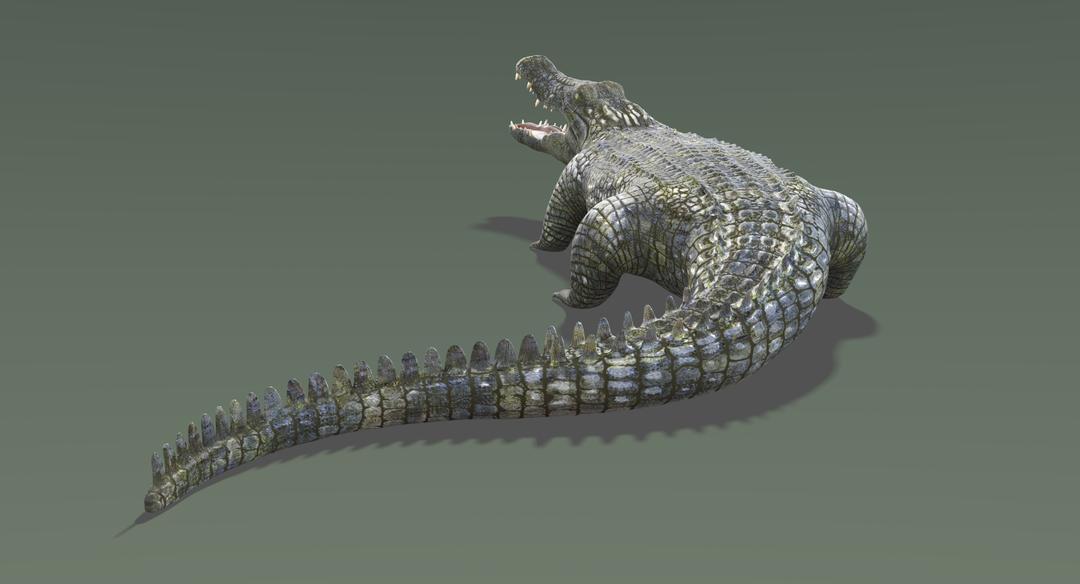 Crocodile 2 Rigged Crocodile 3 png