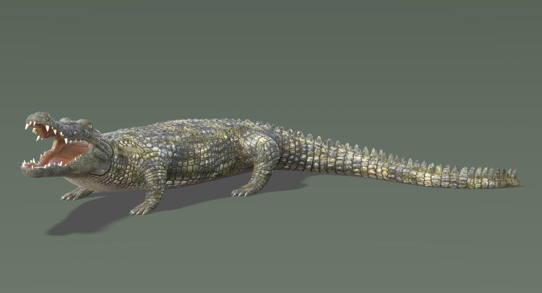 Crocodile 2 Rigged Crocodile 5 png