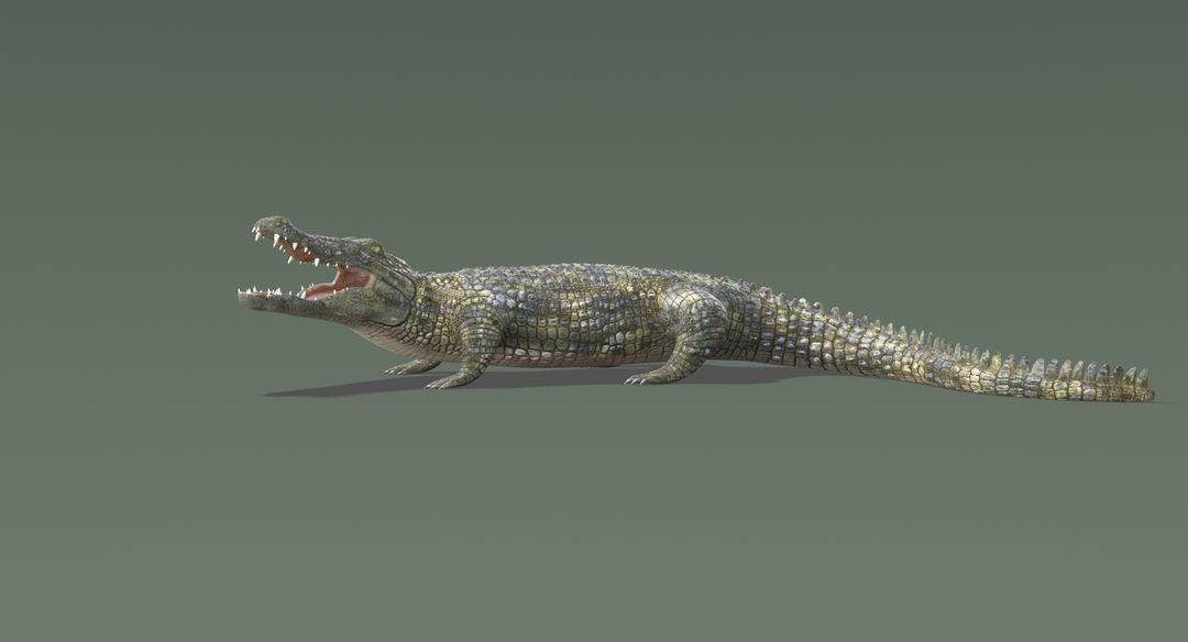 Crocodile 2 Rigged Crocodile 8 jpg