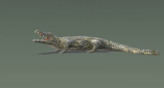 Crocodile 2 Rigged