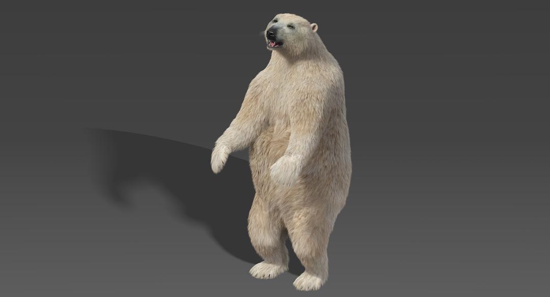 Polar Bear (Fur) Rigged Bear Standing png